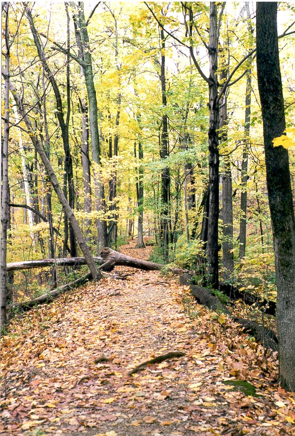 A trail in Happy Hollow Park. West Lafayette, Indiana