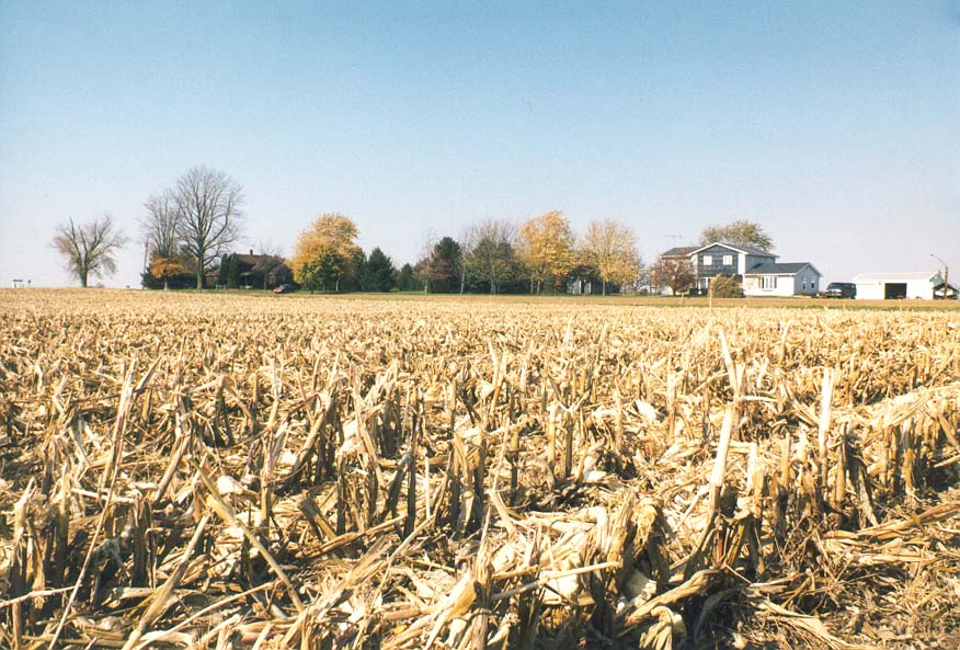 Corn field near Otterbein on C.R. 1200 East 6 miles west from Lafayette. Indiana