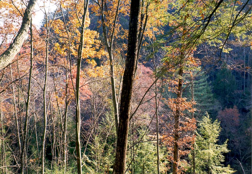Forest below Gray's Arch. Red River Gorge, Kentucky