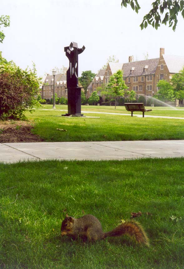 A squirrel near Residence Halls at the University of Notre Dame. South Bend, Indiana