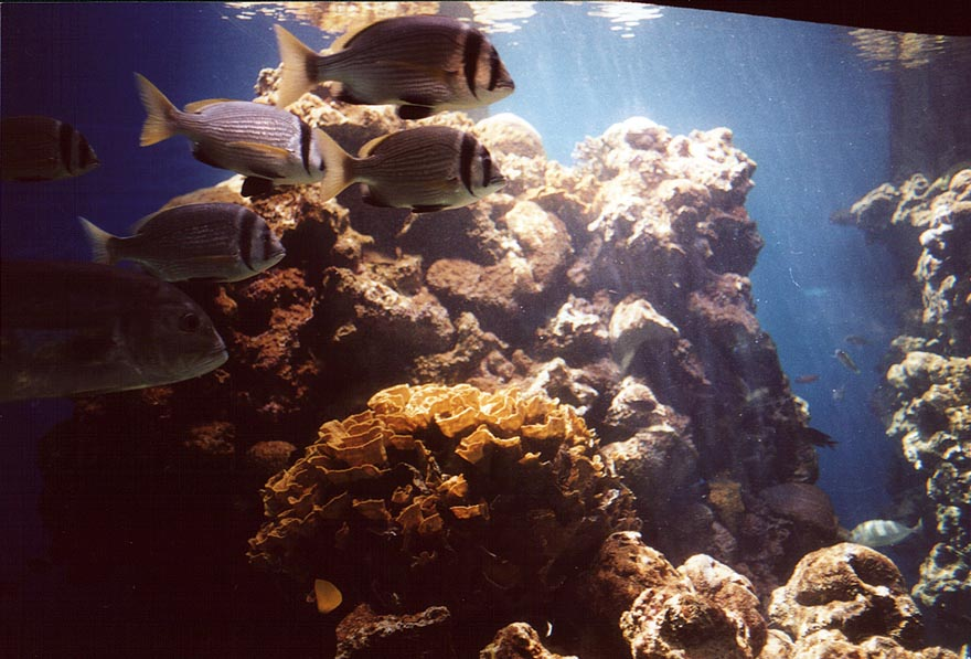 Coral fishes in aquarium. Eilat, the Middle East