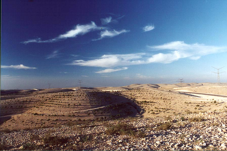 Hills with planted pines in Negev Desert, 1.5 miles north from Beer-Sheva. The Middle East