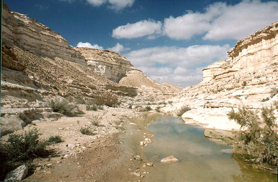 Nahal Akev creek canyon below Ein Akev Elyon...miles east from Avdat. The Middle East