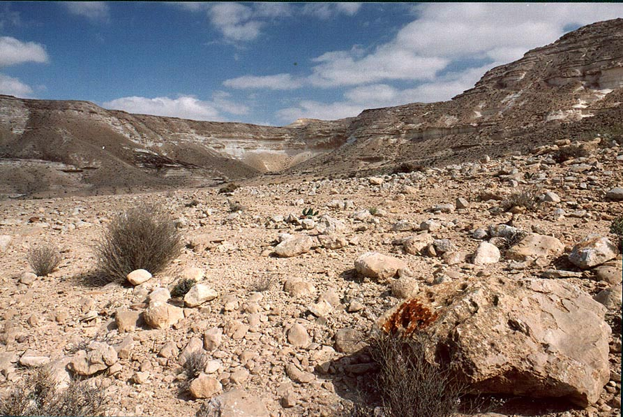 Desert landscape of Nahal Akev creek canyon, 2.5 miles east from Avdat. The Middle East