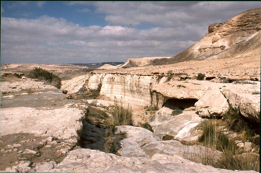 Ein Akev Tahton spring creating a small sub...north-east from Avdat. The Middle East