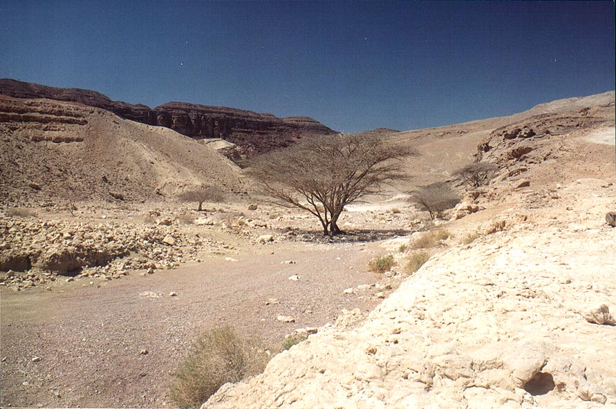 A creek near Ein Netafim spring, 3 miles north-west from Eilat. The Middle East