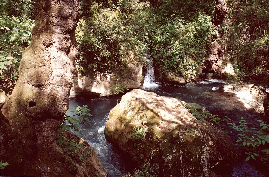 Near the Banias Falls on Hermon River in Banias Park. Golan Heights, the Middle East