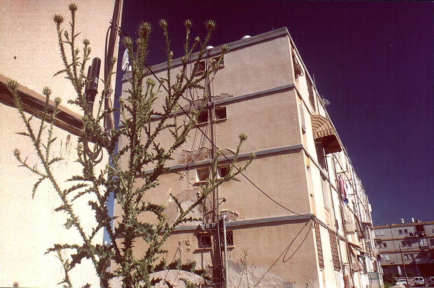 Big thorny plants in Shekhuna Gimmel Quarter near...Beer-Sheva, the Middle East