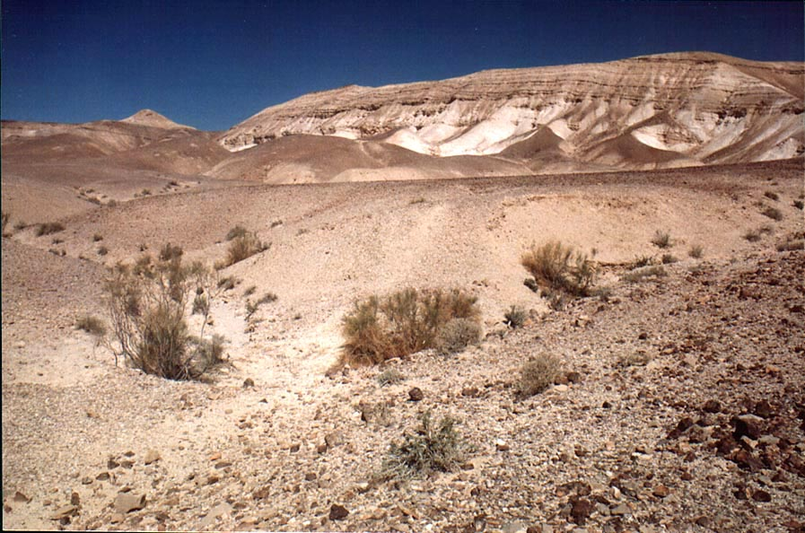 Valley of Nahal Bokek River in Judean Desert, 3 miles west from Ein Bokek. The Middle East
