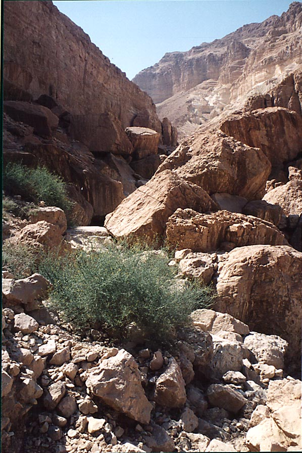 A trail over rocks behind En Namer spring in...west from Masada. The Middle East