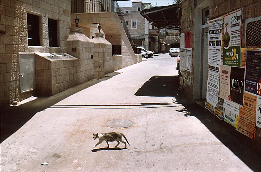 A stray cat in Me'a She'arim community. Jerusalem, the Middle East