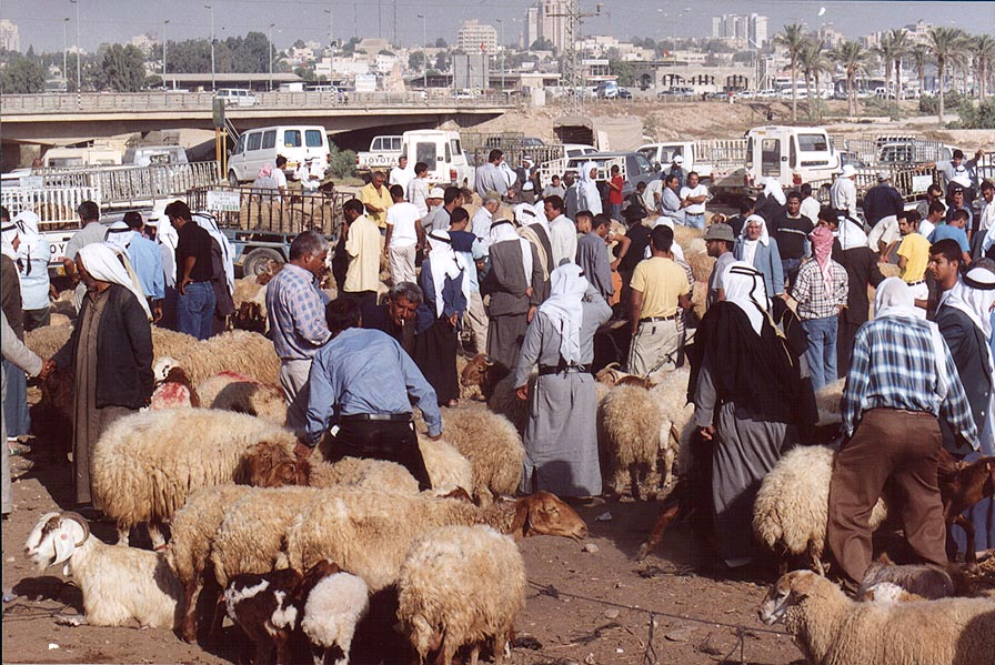 Animal section of Bedouin Market. Beer-Sheva, the Middle East