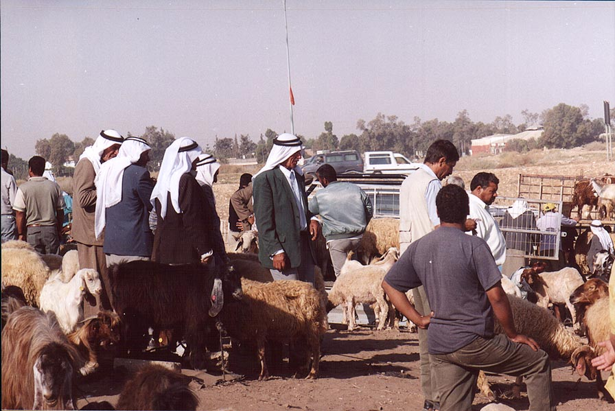 Sheep trade at Bedouin Market. Beer-Sheva, the Middle East