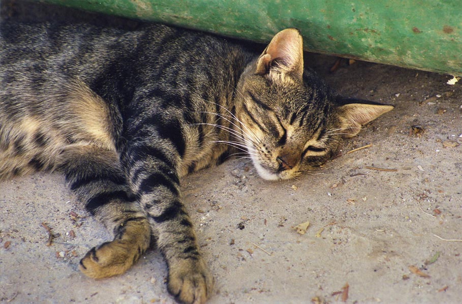 A cat resting in shade of a dumpster at Yavez...Beer-Sheva, the Middle East
