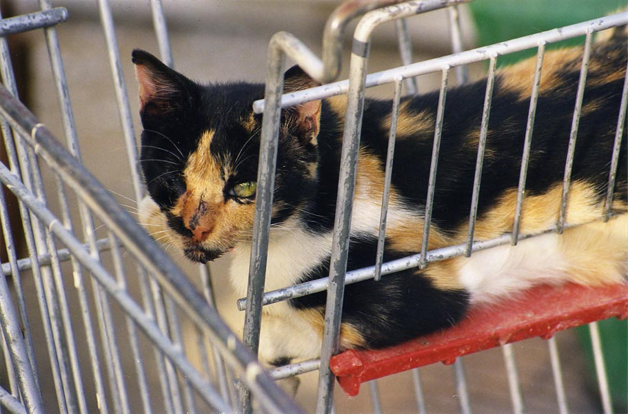 A one eye cat in a junk cart at Nili St. in...Beer-Sheva, the Middle East