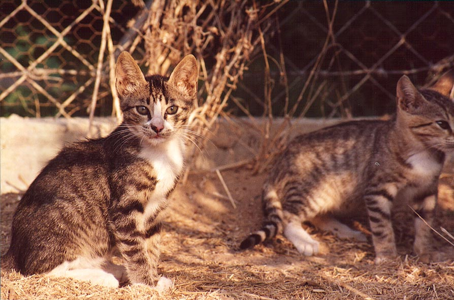 Cats in Shekhuna Dalet neighborhood. Beer-Sheva, the Middle East
