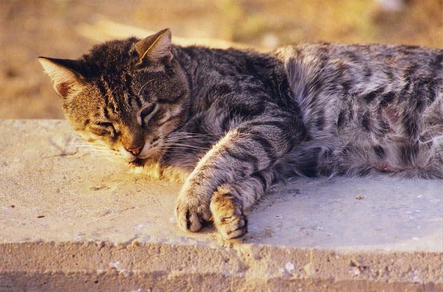 A grey cat sleeping at evening sun at Nili St. in...Beer-Sheva, the Middle East