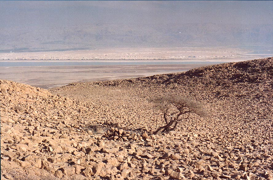 Plateau of Mount Eliazar with an acacia tree. Dead Sea is in background. The Middle East