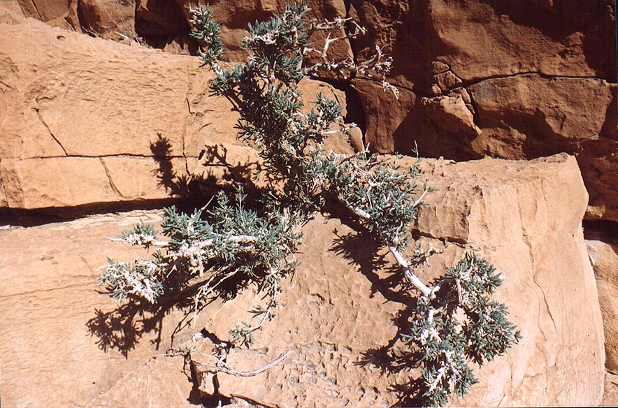 A plant among limestone at upper part of David creek in Ein Gedi. The Middle East
