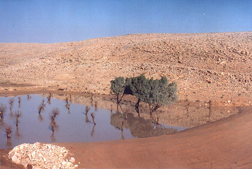 A pool of water after rains north from Sde Boker seen from Rd. 40. The Middle East