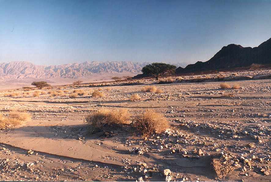 Evening landscape of Timna stream in northern...north from Eilat. The Middle East