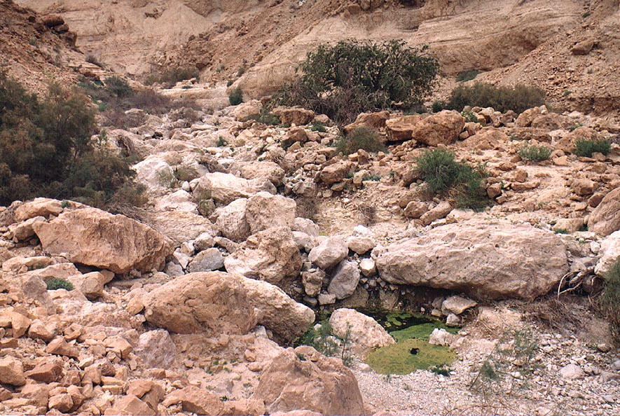 Springs at the end of Mishmar canyon, near Dead Sea. The Middle East