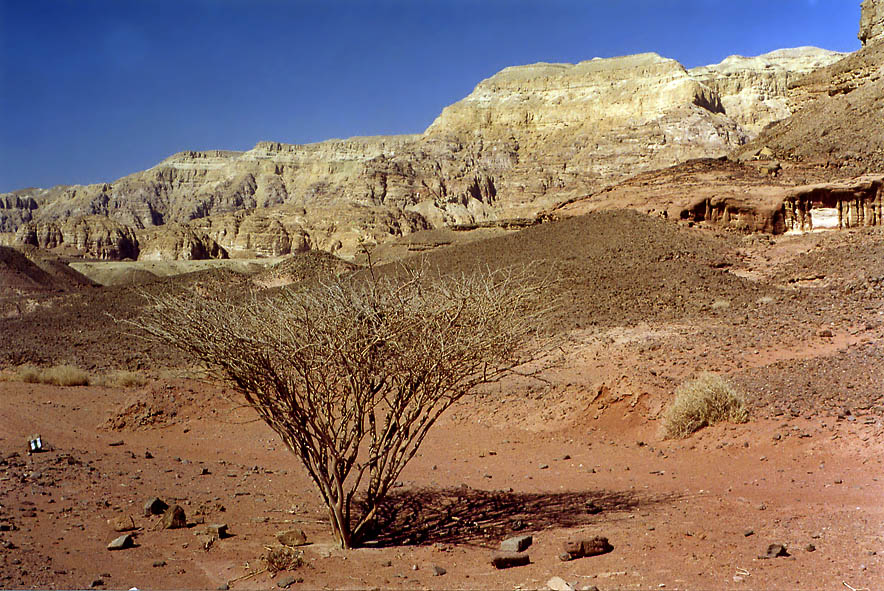 View from a road in western Timna Park at morning...north from Eilat, the Middle East