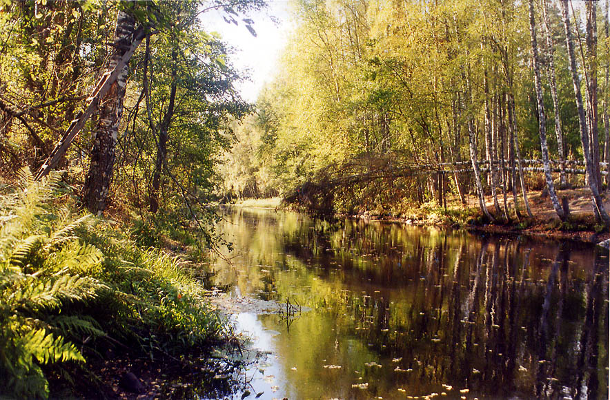 Volchya River near Petiyarvi in Karelian Isthmus 45 miles north from St.Petersburg, Russia
