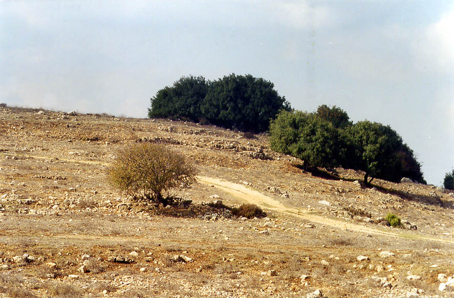 Gardens among ruins of Druze village of Germak in...Meron in Galilee. The Middle East