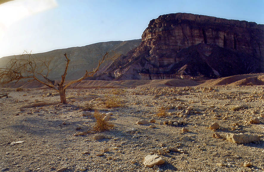 Roded Wadi north from Eilat. The Middle East