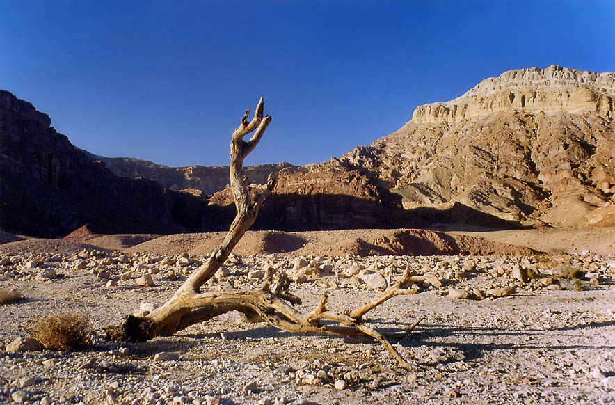In Roded Wadi north from Eilat. The Middle East