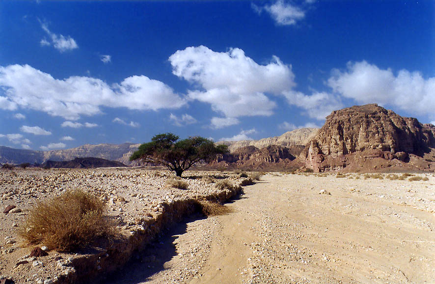 Timna Stream north-west from Massif Timna, 13 miles north from Eilat. The Middle East