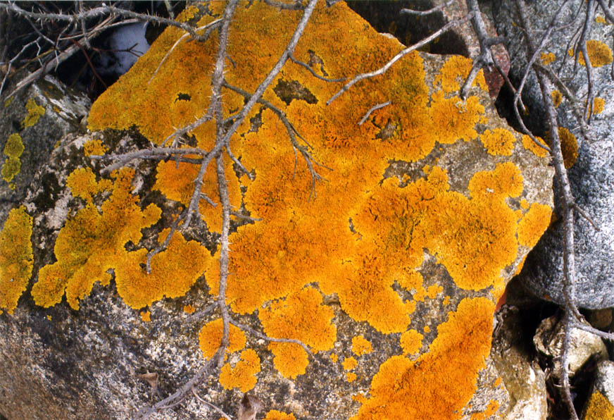 A stone with golden lichen on Cliff Walk near Rough Point. Newport, Rhode Island