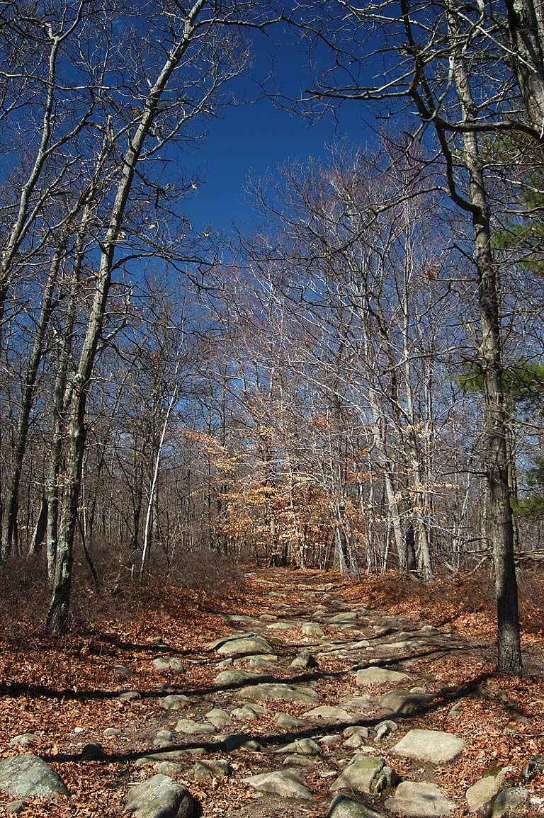 Mowry (or Morey) Path in Freetown Fall River State Forest, Massachusetts