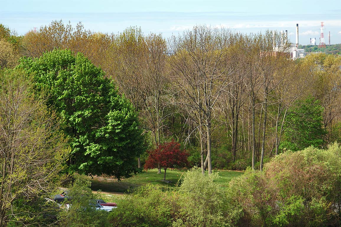 A backyard from an apartment in northern Fall River. Massachusetts
