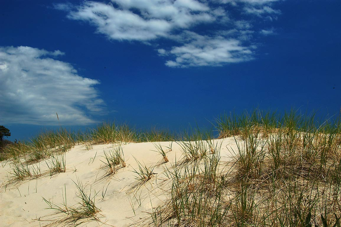 Dunes of Horseneck Beach. Westport, Massachusetts