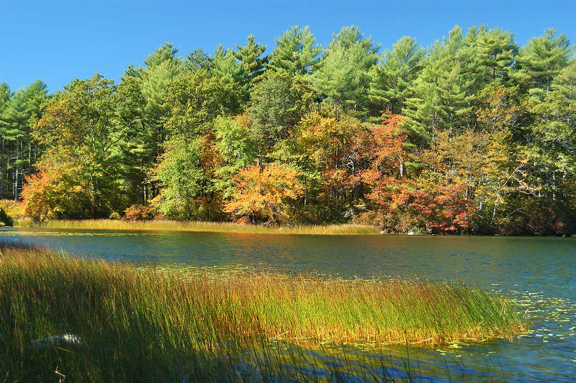 South end of Rocky Pond in Myles Standish State Forest. Massachusetts