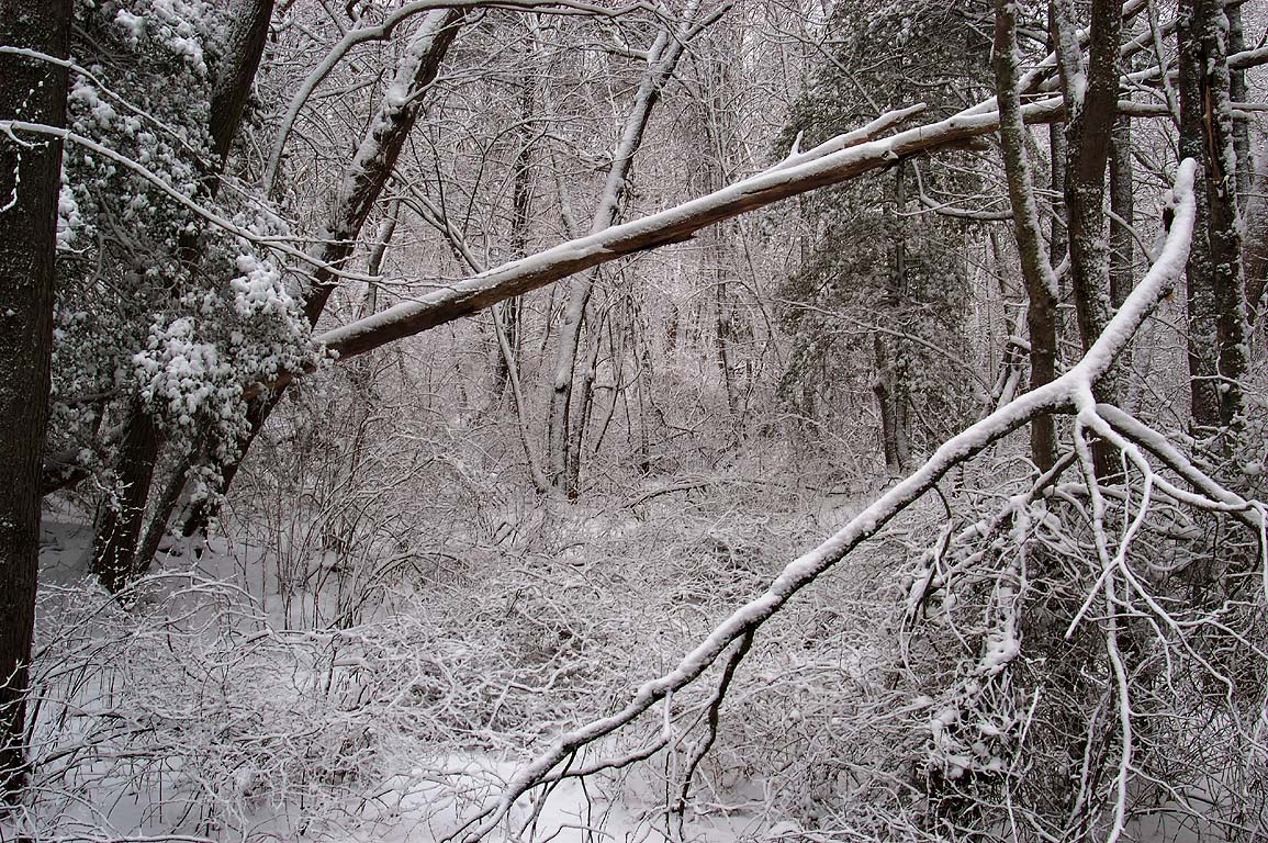Deerfield Swamp after snowfall, view from Lucy Little Rd.. Dartmouth, Massachusetts