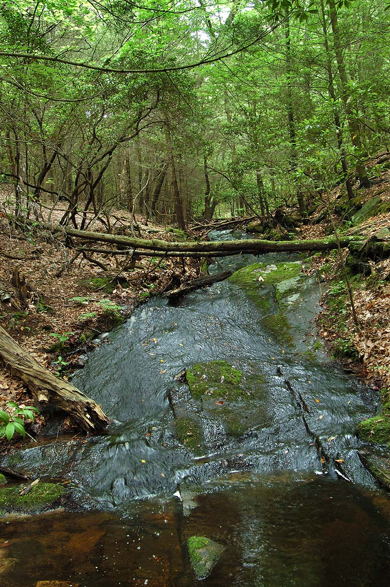 A brook near Orange (Vista) trail in Devils Hopyard State Park. East Haddam, Connecticut