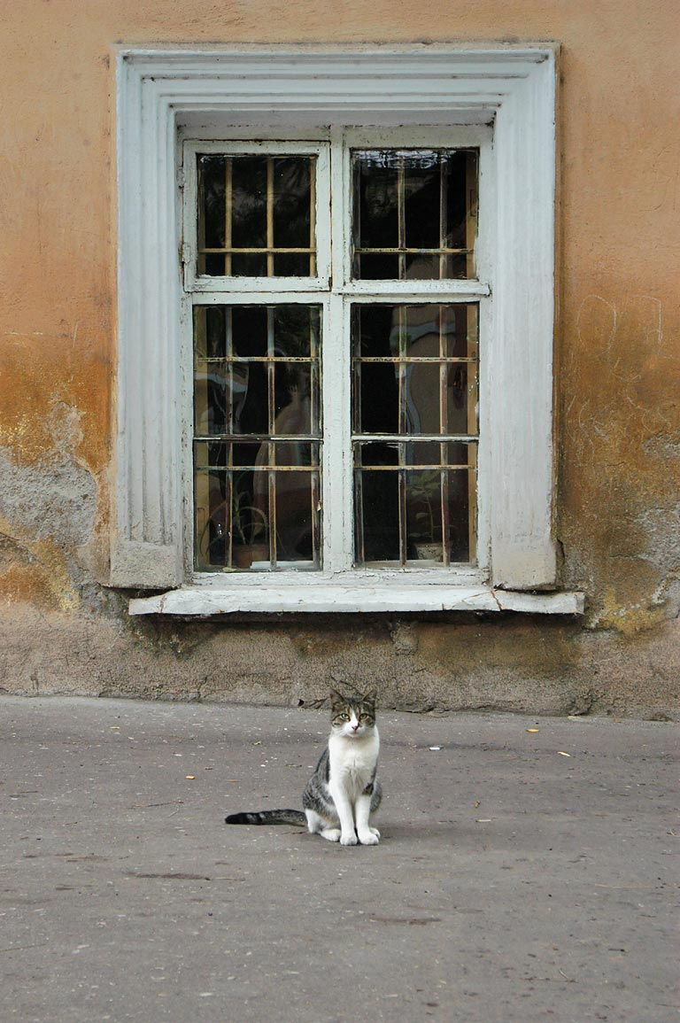 A stray cat on Pushkinskaya Street. Odessa, Ukraine