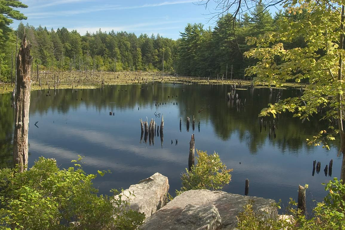 A pond in northern end of Borderland State Park. North Easton, Massachusetts