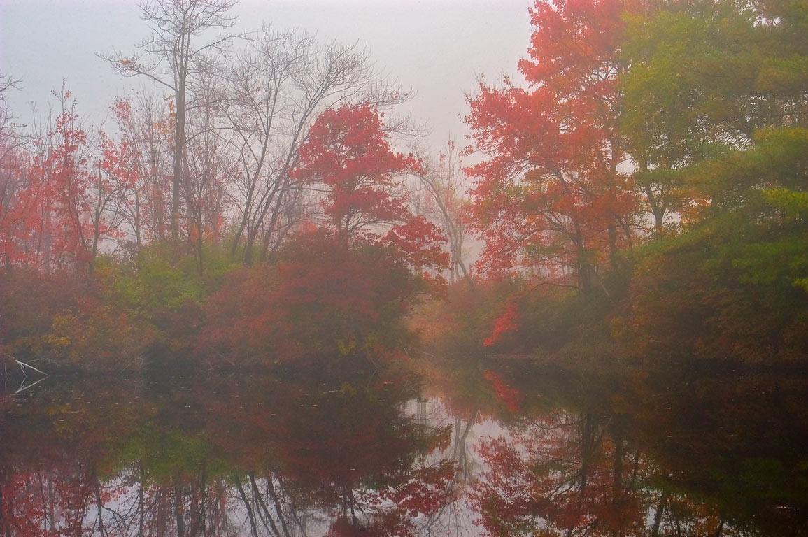 A holding pond (zoomed) of Perry Bogs in...in fog. East Taunton, Massachusetts