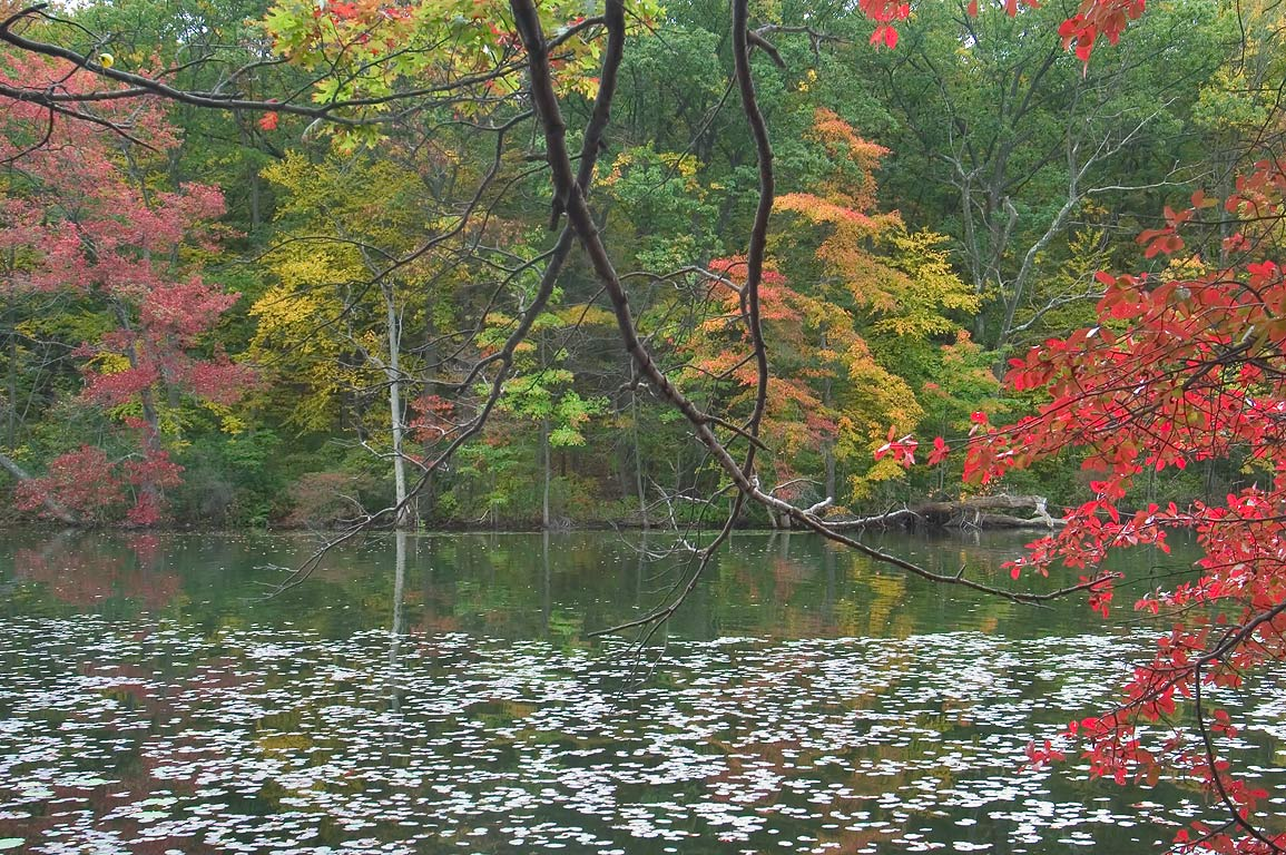 A small pond in Lincoln Woods State Park. Providence, Rhode Island