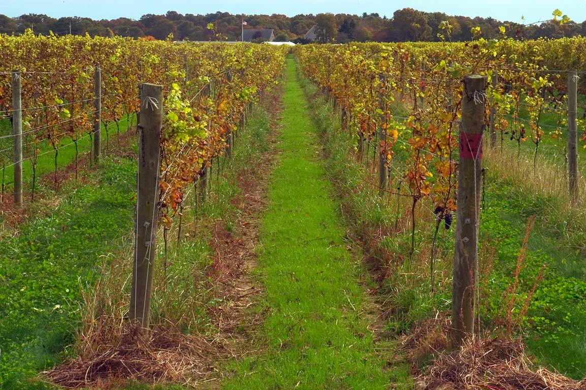 Westport Rivers Vineyard from Hix Bridge Rd.. Westport, Massachusetts