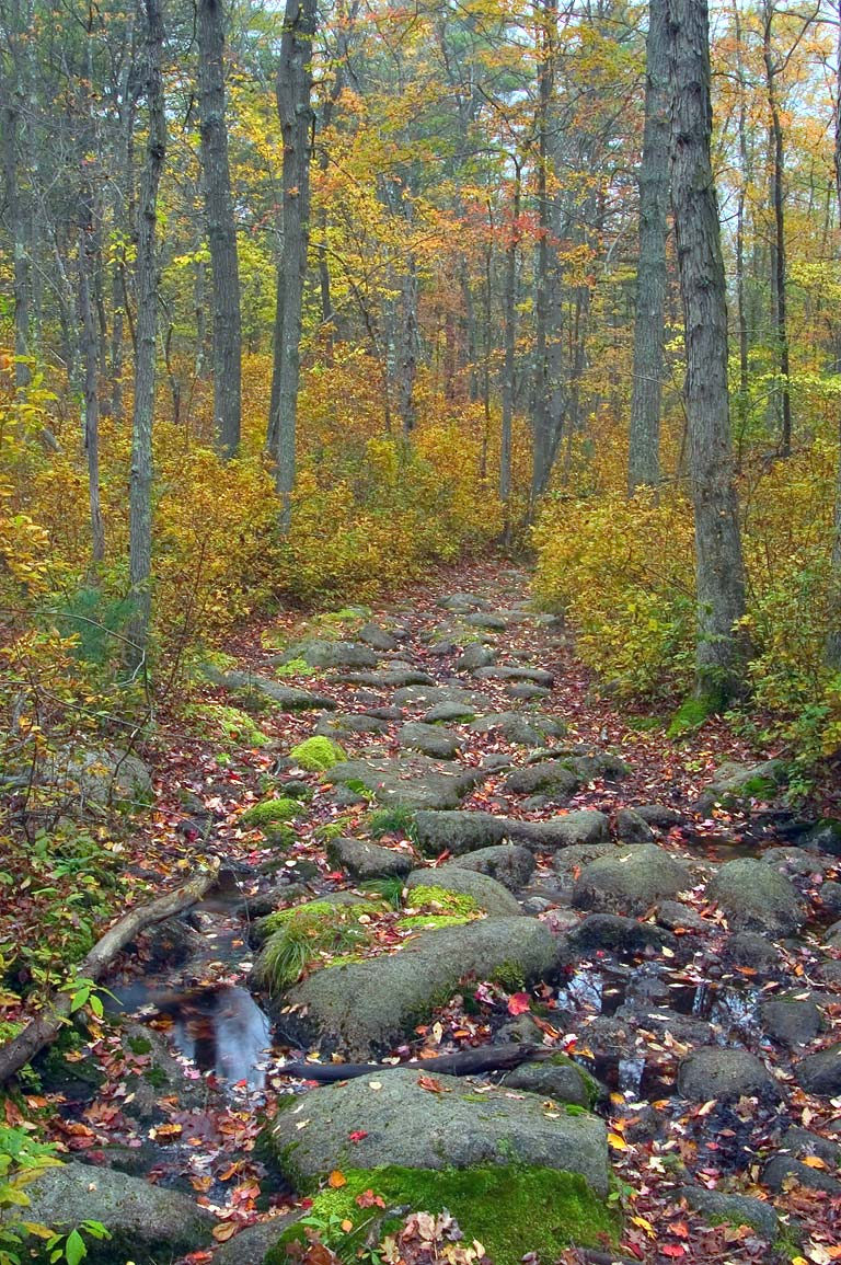 Massasoit Trail in Freetown/Fall River State Forest. Massachusetts