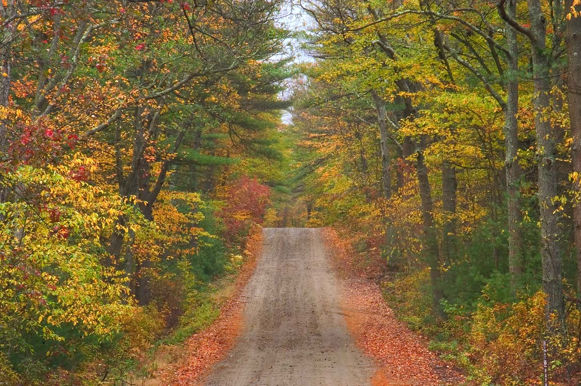 Payne Rd. in Freetown/Fall River State Forest. Massachusetts