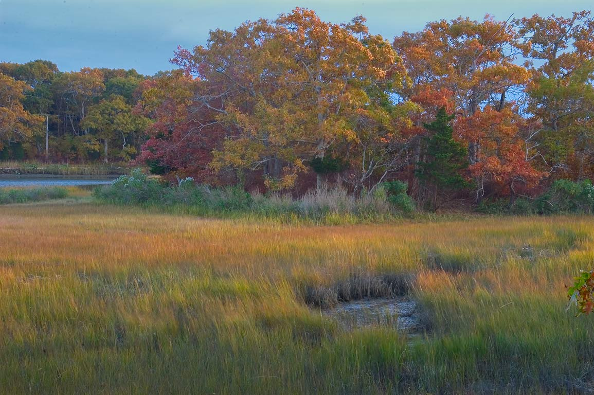Salt marshes of Slocums River near Lloyd Center...Studies. Dartmouth, Massachusetts