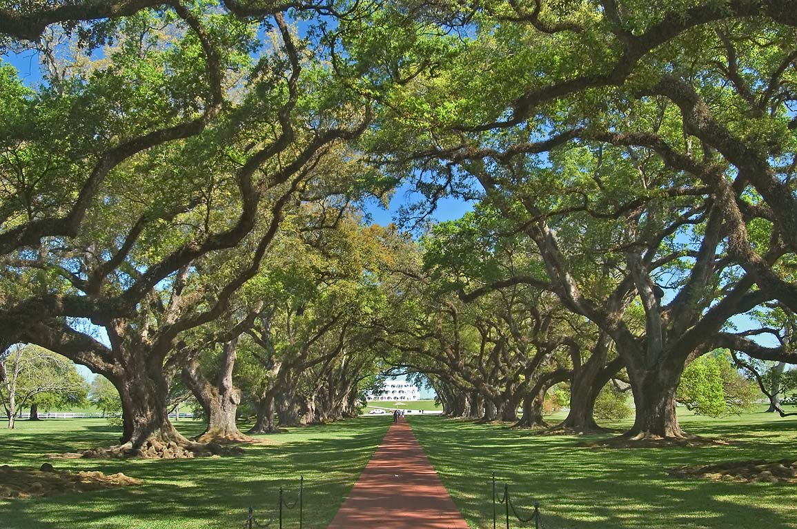 An oak alley, view from a house, in Oak Alley Plantation. West from New Orleans, Louisiana