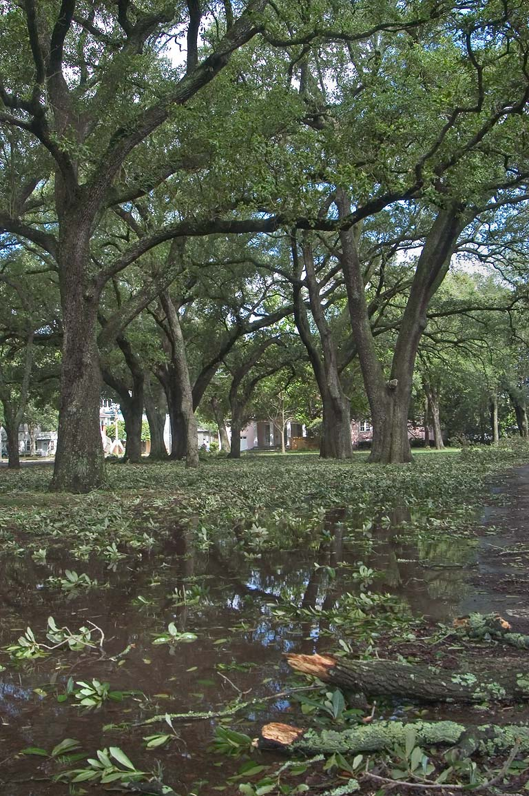 "Fallen oak limbs after a tropical storm ""Cindy...Audubon Park. New Orleans, Louisiana"