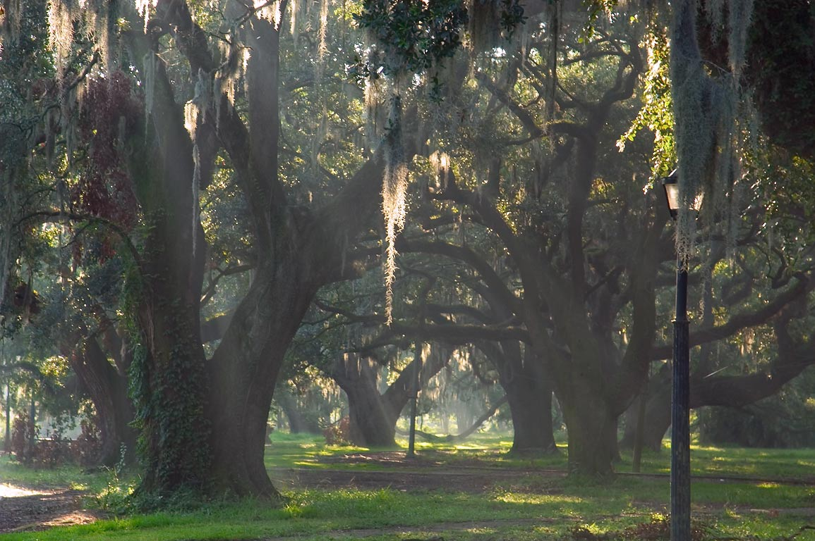 Morning mist and oaks in City Park. New Orleans, Louisiana